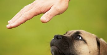 Curso Adiestrador Canino