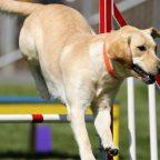 Curso de Adiestrador Canino en Granada y Almería