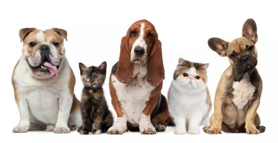 Últimos días de matrícula para Ayudante Técnico Veterinario y Peluquería Canina en Granada