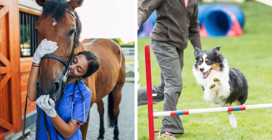 Abierta matrícula para los Cursos de Ayudante Técnico Veterinario y Adiestrador Canino en Granada